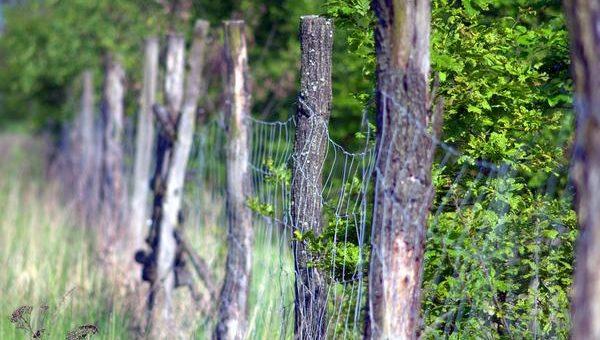 Siatka leśna i jej zastosowanie